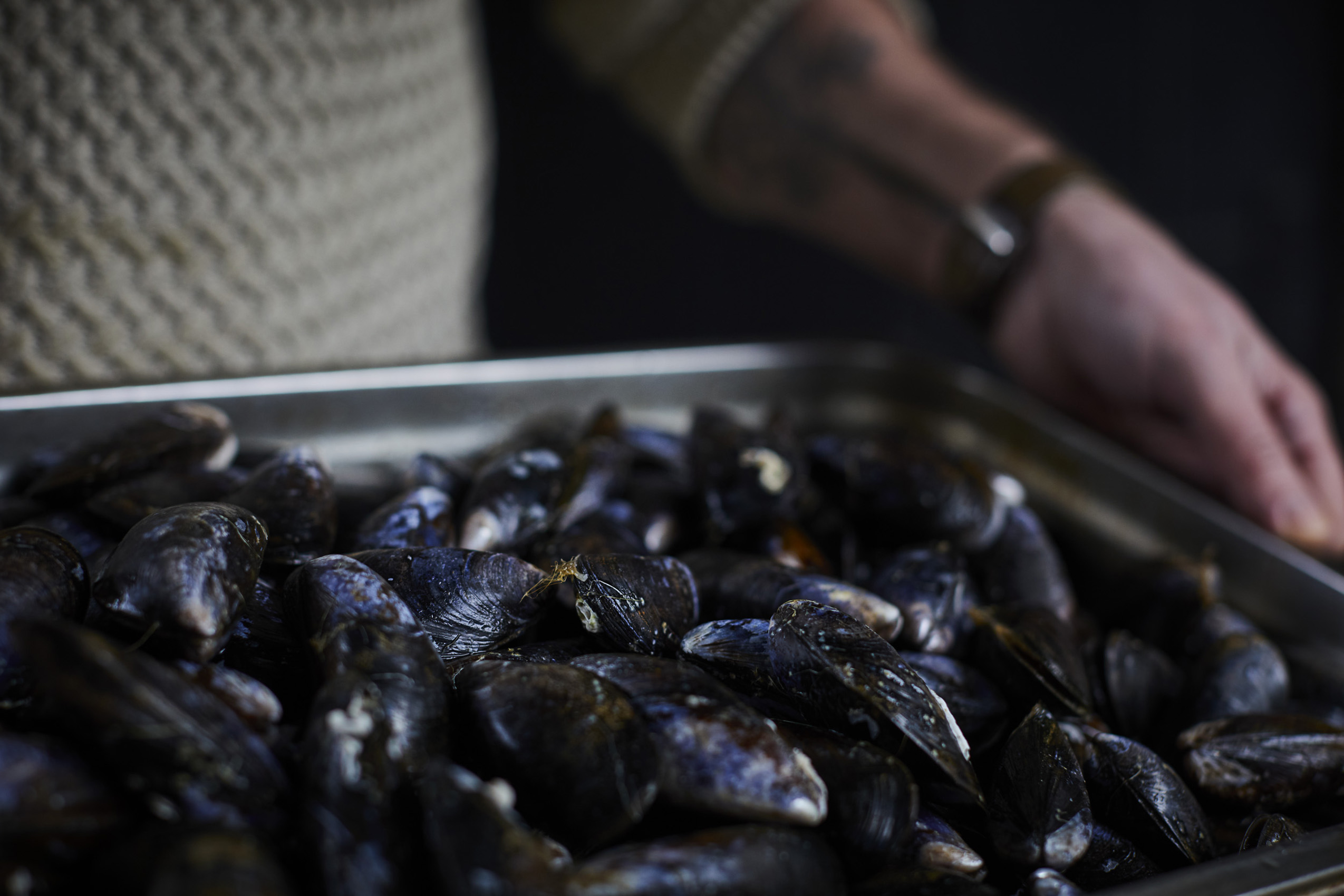 SteveRyan_Photographer_Ingredients_Produce_Fish_Mussels_09