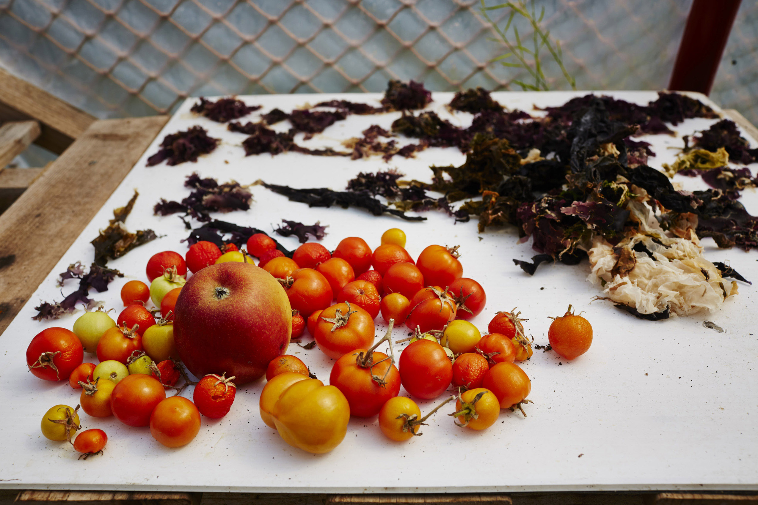 SteveRyan_Photographer_Ingredients_Produce_Vegetables_Tomatoes_18